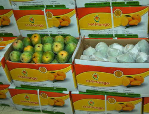 Order, Buy, Send & Gift Premium Handpicked Export Quality Grade Kesar Mangoes to your Friends & Family